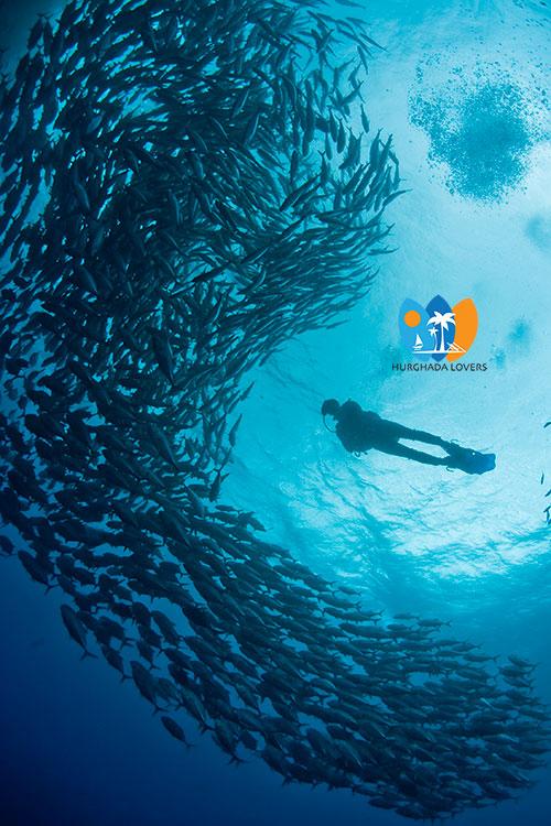 Diving Star Hurghada Best Price Scuba Diving Marsa Alam
