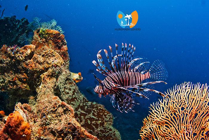 Hurghada Tauchschule Beste Preise Padi Makadi Bay Tauchen Beste Zeit Zum Tauchen In ägypten