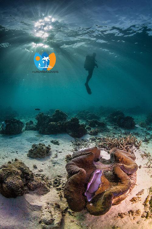 Scuba Diving Hurghada Best Price Daily Diving Marsa Alam Egypt